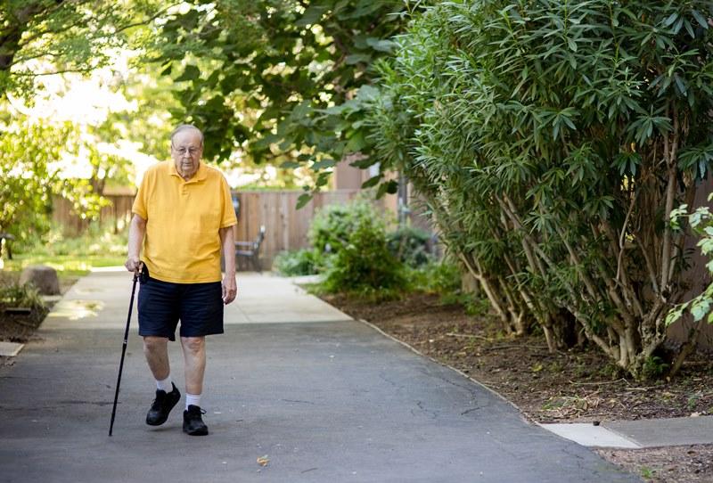 Senior Approved Walking Stick Trekking Pole Cane